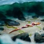 青アンコのソーサリー・ドロー「沿岸の発見」が公開!覚醒モードでは土地に4つの+1/+1カウンターを置いてエレメンタルに!