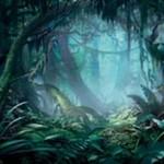 プレミアム神話レアの「霧深い雨林(Misty Rainforest)」が公開!森か島をサーチできるゼンディカー・フェッチランド!