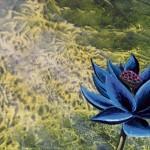 MTG公式壁紙に「Black Lotus」などが追加!