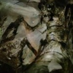 デルバーの最終進化形態!?青の昆虫ホラー「完成態」がイニストラードを覆う影に収録!