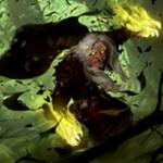 SOI収録の緑レア狼男「Sage of Ancient Lore」が公開!手札枚数に等しいPTを獲得&CIPでドロー!※日本語名は「古き知恵の賢者/古き飢えの人狼」!
