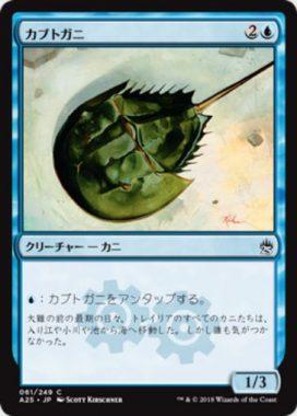 カブトガニ(Horseshoe Crab)マスターズ25