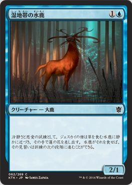 湿地帯の水鹿