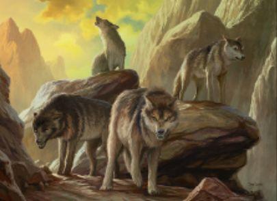 異界月に収録の赤レア狼「Assembled Alphas」が公開!ブロックしたりブロックされたりすると3点ダメージをクリーチャーとプレイヤーに飛ばす!