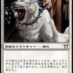 今田家の猟犬、勇丸(MTG 犬カード)