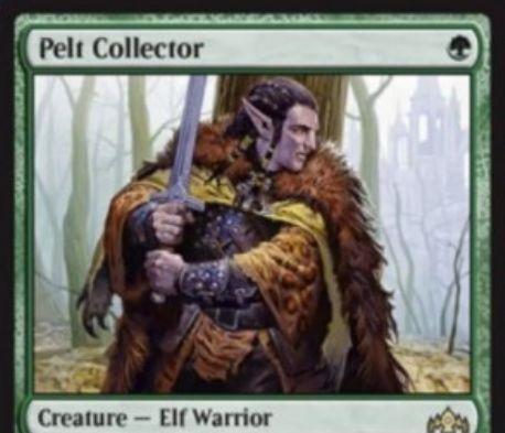 【ラヴニカのギルド】緑のエルフ戦士「Pelt Collector」が公開!1マナ1/1&これよりもパワーが高い生物が戦場に出たり死亡すると+1/+1カウンターを1個獲得!3個以上の+1/+1カウンターが乗っていればトランプルを獲得!