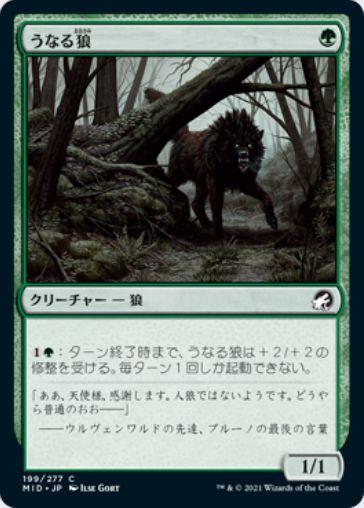 うなる狼(Snarling Wolf)